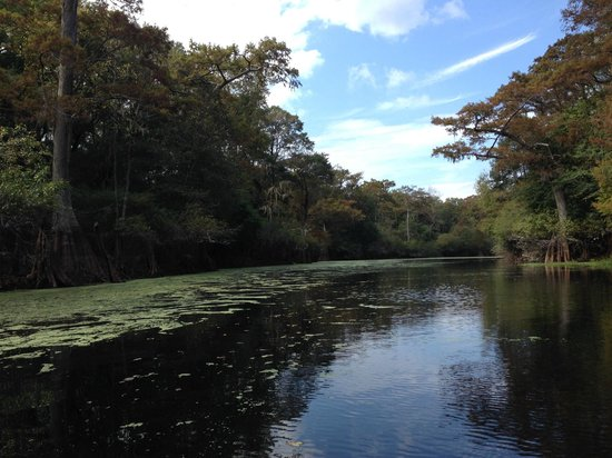 Wilderness Southeast Tours : Ebenezer Creek and it's beautiful duckweed