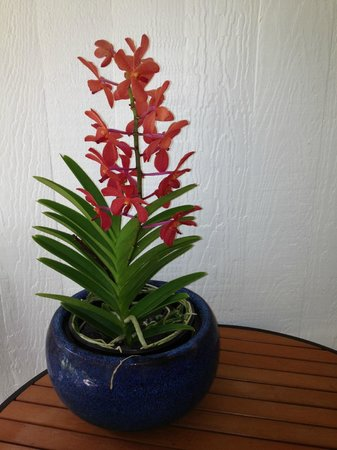 Waipio Wayside B&B: Fresh orchids in the entryway