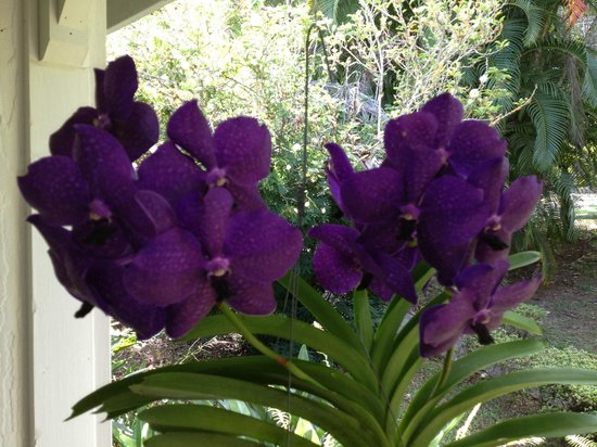 Waipio Wayside B&B: So much fun exploring the grounds and collection of beautiful orchids
