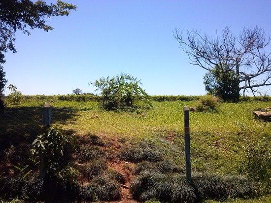 San Vicente, Argentinien: Ruta 221- Plantación de Té.