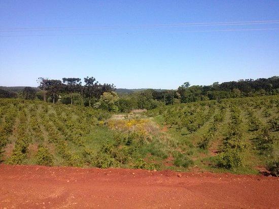 San Vicente, Argentinien: Ruta 221- Plantaciones