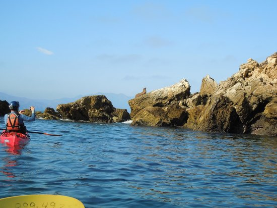 Paddle Sports Center : sea lions basking on the rocks