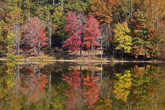 Lake Needwood: Needwood Lake