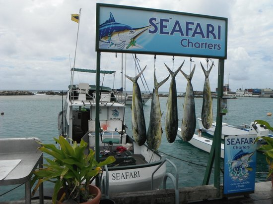 Seafari Fishing Charters: Not bad for a first time fishing in the South Pacific