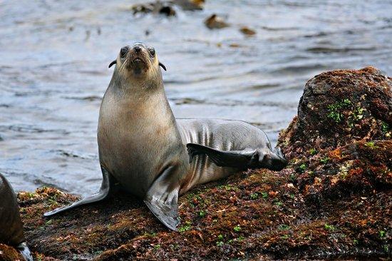 Wildlife Coast Cruises: Inquisitive seal