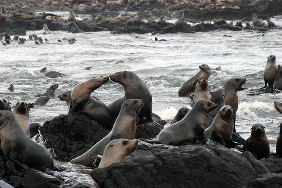 Wildlife Coast Cruises: Seals kissing on Seal Rocks