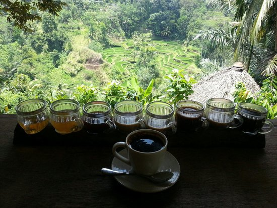 Bali Pulina Agro Tourism: Great coffee, great view!