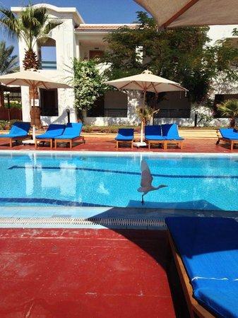 Hilton Sharm Dreams Resort : berd