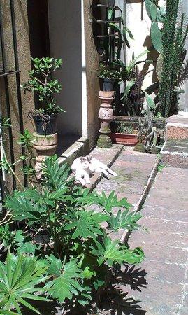 Jade Guesthouse : Gato en el patio