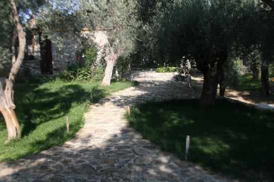 Gera's Olive Grove: bahçeden