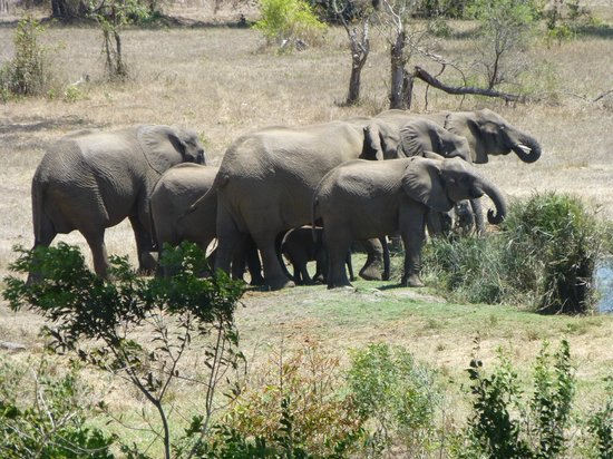 Sabi Sabi Bush Lodge: Elephant herd arriving at the Waterhole