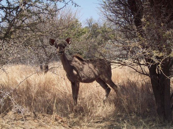 Kedar Heritage Lodge, Conference Center & Spa: Our welcoming Kudu