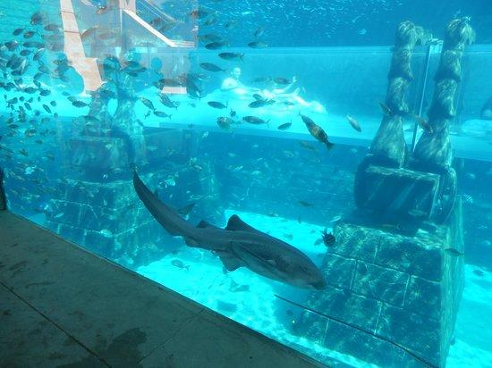 Aquarium avec passage de bou e a l interieur picture of for Aquarium interieur