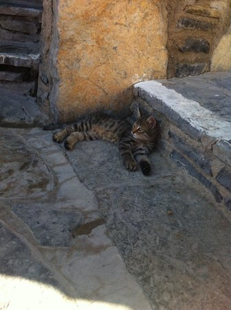 Palm Garden Hotel: Cats home