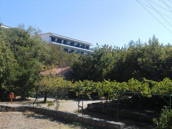 Delfinia Hotel & Bungalows: kamers tuinzijde