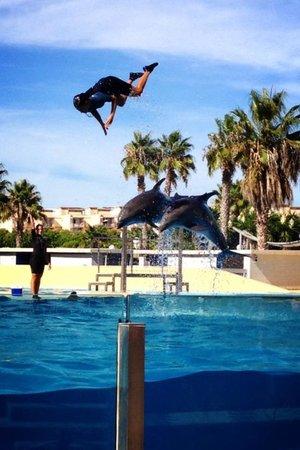 Estival Park Salou: The water park dolphin show