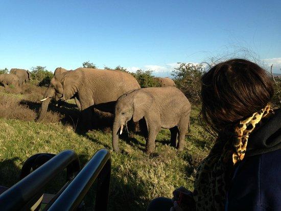 Kariega Game Reserve - River Lodge : Elephant beside the Landcruiser