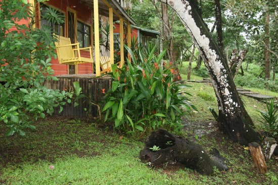 Howler Monkey Resort: a few of the cabins overlooking the Belize River