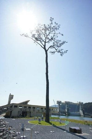 Miracle Lone Pine Tree: いつまでも・・・