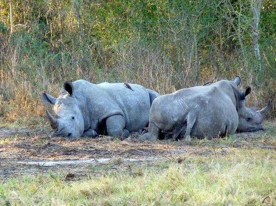 Thula Thula Exclusive Private Game Reserve and Safari Lodge: Thabo e Ntombi