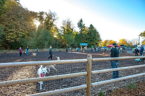 Мукилтео, Вашингтон: Tails and Trails Mukilteo Dog Park