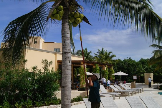 Hacienda Tres Rios: getting the fresh coconut for our drink