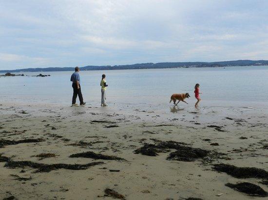 Longbeach Clifftop Retreat: Local beach
