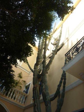 Casa Delfino Hotel & Spa : Amazing Cactus.