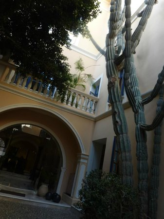 Casa Delfino Hotel & Spa : Another view of the amazing cactus.