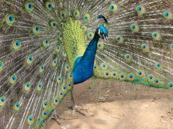 Zoologico de Americana: É encantador, inspirador....