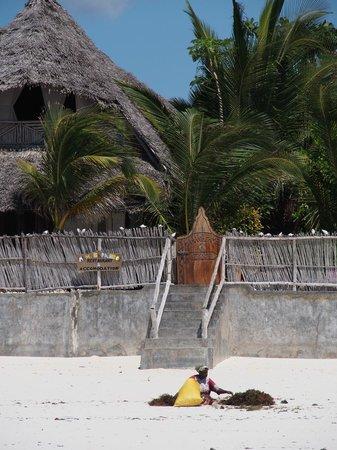 Mamamapambo Boutique Hotel : Entrée de l'hôtel depuis la plage