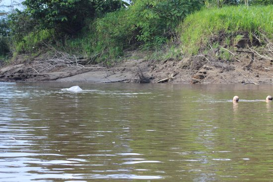 Pacaya Samiria Amazon Lodge: river dolphin