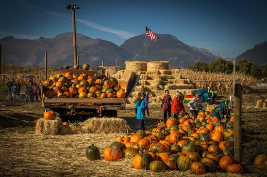Victor, MT: They sell pumpkins and give hayrides too!