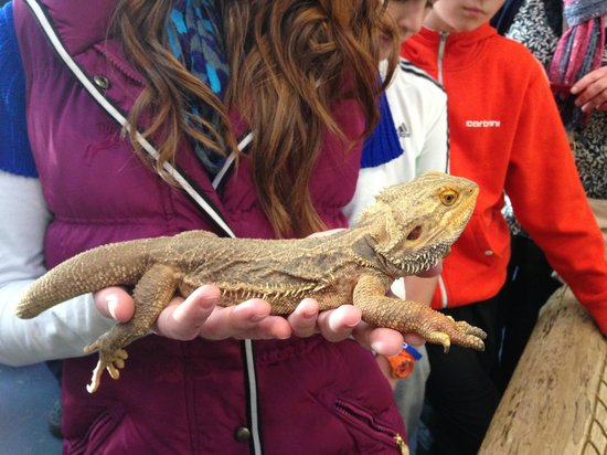 The National Reptile Zoo : Holding one of the reptiles