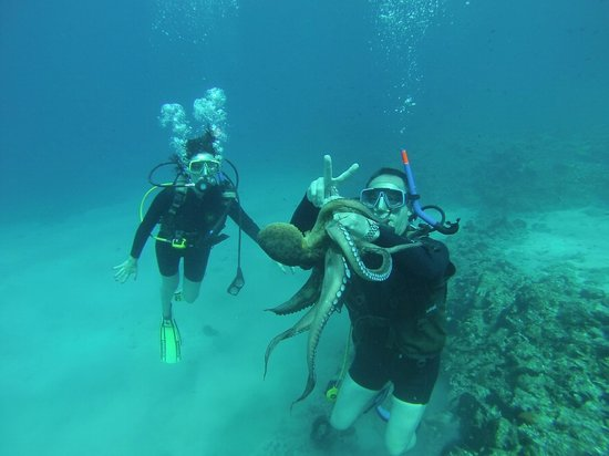 Octopus Diving Center: My wife and I entertaining an octopus, while Theo was taking pictures