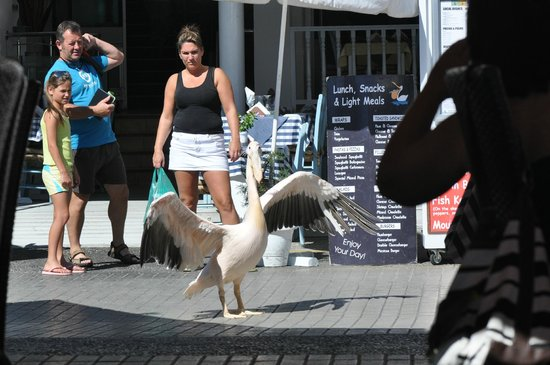 The Pelican: Sweet Coco :-)