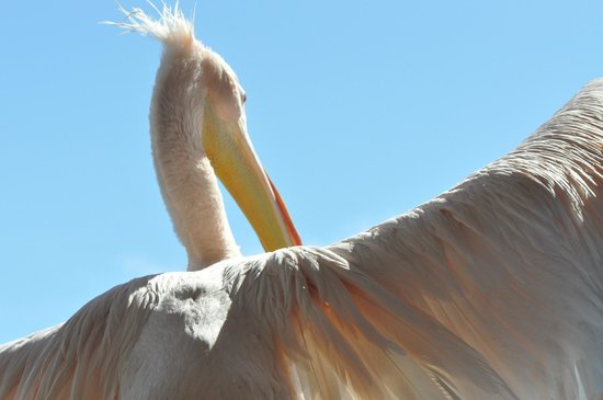 The Pelican : Sweet Coco :-)