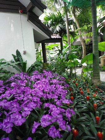 Laluna Hotel and Resort: Jardines