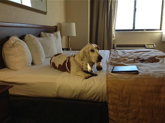 Capital Plaza Hotel: Daisy Lynn was looking at the menu for dinner!