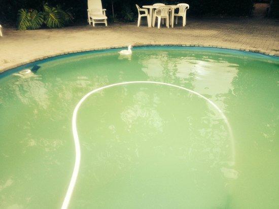 Die Eike: Pool