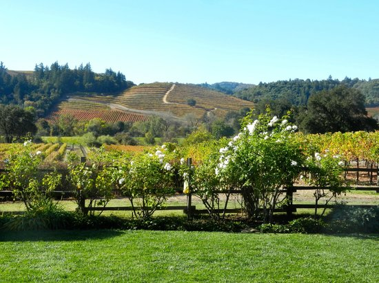 Dutcher Crossing Winery : The view at Dutcher Crossing