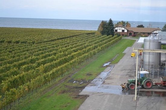 Konzelmann Estate Winery: Vineyards and Lake Ontario from Rotunda