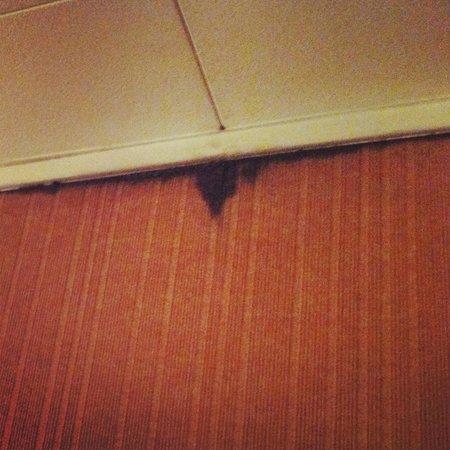Hotel Nid de Cigognes : Sporcizia della tappezzeria