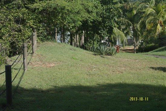La Creole Beach Hotel & Spa: un des jardins et ses Iguanes