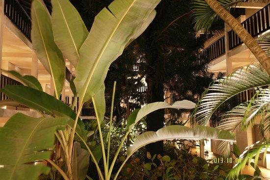 La Creole Beach Hotel: Jardin coté chambres