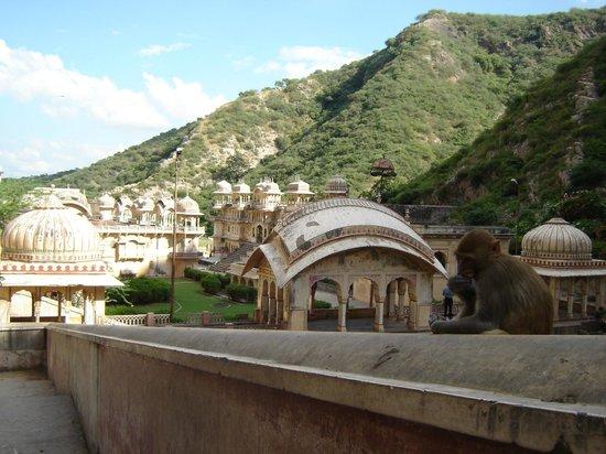Galtaji Temple : Templo del Dios Sol (o de los Monos). Galta, Jaipur.