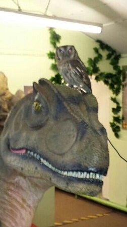 Dinosaur And Raptor Experience: cool oscar