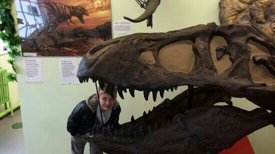Dinosaur And Raptor Experience: real life size rex