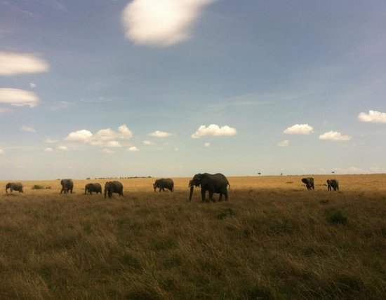 Entumoto Safari Camp: My favorite - the elephants. They are just so quiet as they walk with occasional noises.