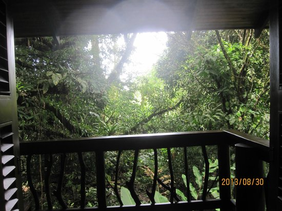 Playa Nicuesa Rainforest Lodge: Great view
